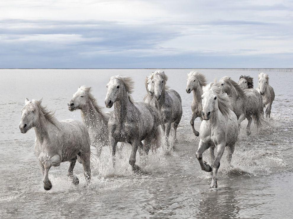 wild horses ettagirl