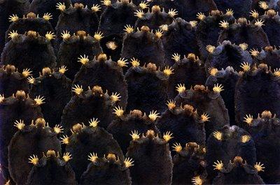 European Moles_Rosamond Purcell