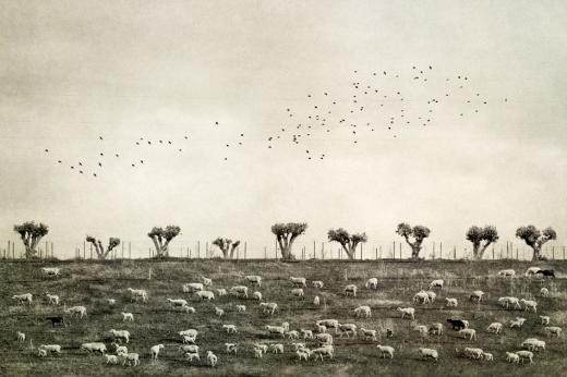 flocks-mandy-schoch