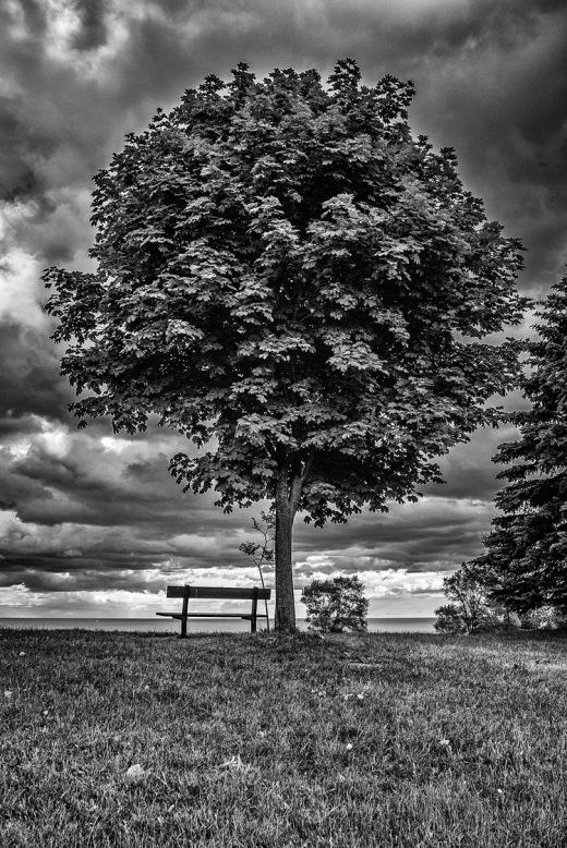 tree_bench_scarborough-bluffs_01