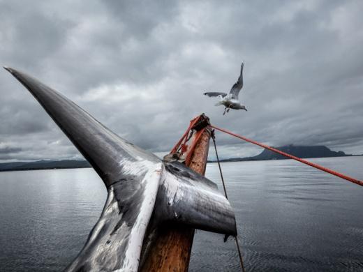 01-minke-whale-deck-jan-bjorn-670
