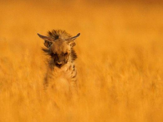 hyena-park-india_69218_990x742