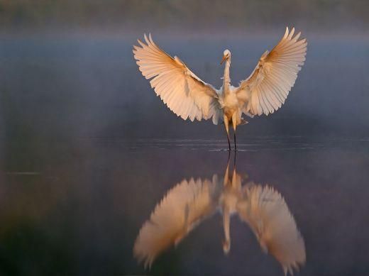 bird-misty-morning_73859_990x742