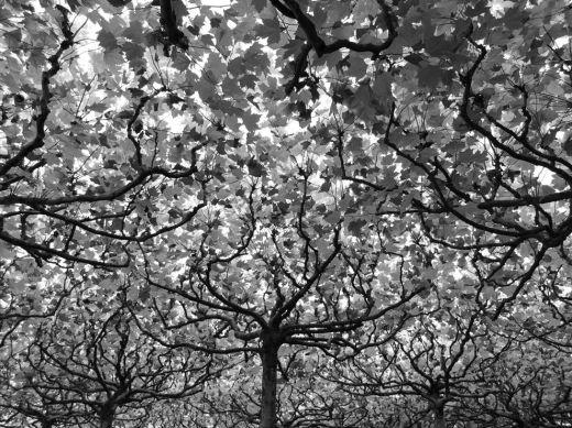 leaves-canopy-berlin_73867_990x742