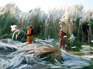 kash-harvest-india_72957_990x742