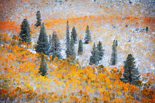 Snow Canvas ~ DM Weber